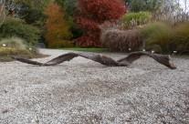 Hélice de Prunus avium
