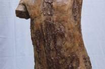Tronc betula